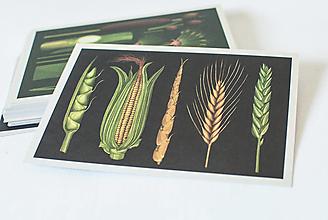 "Papier - Pohľadnica "" Botanicum "" Crops - 13589966_"