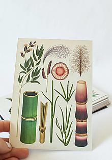 "Papier - Pohľadnica "" Botanicum ""Grasses - 13589997_"