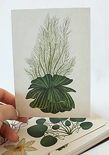 """Papier - Pohľadnica """" Botanicum """" Watter lettuce - 13590047_"""