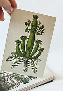 """Papier - Pohľadnica """" Botanicum """" Aquatic primrose - 13590055_"""