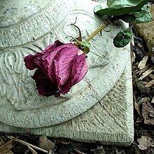 Suroviny - RUŽE - 13608382_