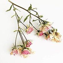 Suroviny - svetloružové mini ružičky - 13696416_