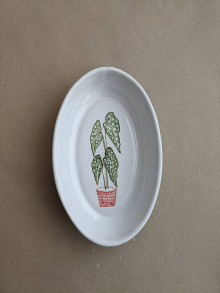 Nádoby - oválna miska rastlina (Begonia maculata) - 13718710_