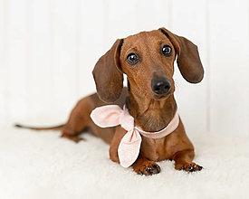 Pre zvieratá - Mašlička pre psíka - svetloružové pásiky - 13716820_