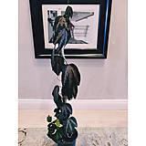 - Passiflora trifasciata (Tricolored passion vine)  - 13724459_