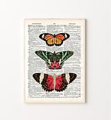 Grafika - Plagát vintage motív - motýle na strane zo slovníka 2 - 13736103_