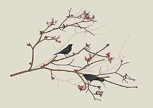 Obrazy - DROZDY NA JARABINE - 13752467_