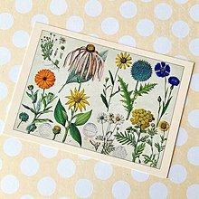Papier - Vintage Botanika - 13759072_