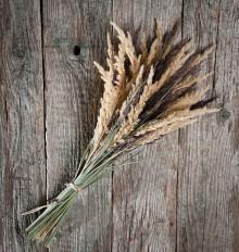 Dekorácie - Prírodná kytica - tráva a rákosie - 13763469_