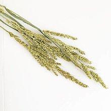 Suroviny - lúčna tráva V - 13764330_