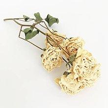 Suroviny - biele ružičky - 13764344_