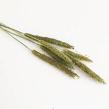 Suroviny - lúčna tráva IV - 13764386_