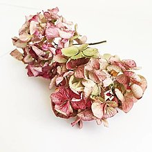 Suroviny - hortenzia zeleno-ružová - 13775622_