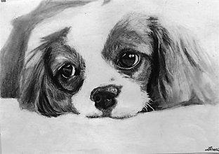 Kresby - Rozkošné šteniatko - 13786901_