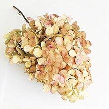 Suroviny - hortenzia maslovo-ružová - 13790440_