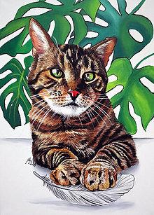 Obrazy - Portrét kočky - na objednávku - 13803121_
