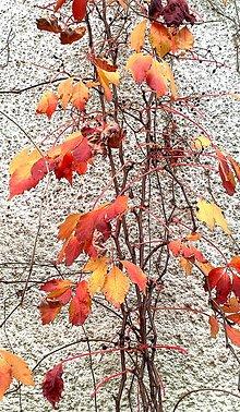 Fotografie - Ohnivá jeseň - 13816404_