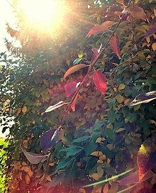 Fotografie - Slnko v korunách stromov - 13822803_