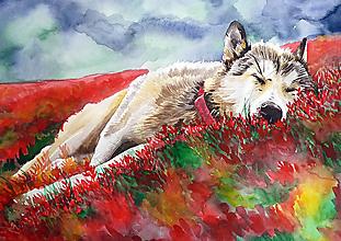 Obrazy - Wolf dreams - A4, A3 - 13833368_