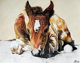 Kresby - Horse - tlač A4, A3 - 13836443_