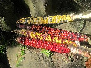 Nezaradené - semená kukurice-Maľované hory - 13866647_