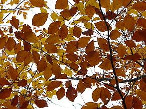 Fotografie - Jesenná nostalgia ... - 13871949_